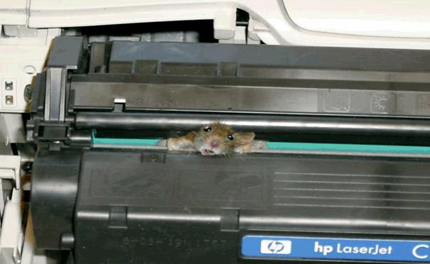 Mouse Jammed in Printer