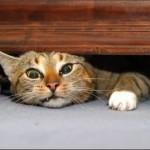 cat_under_bed