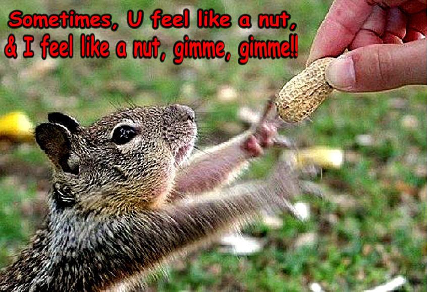 I Feel Like a Nut