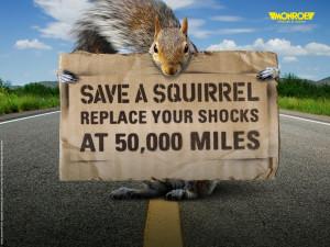 Save a Squirrel